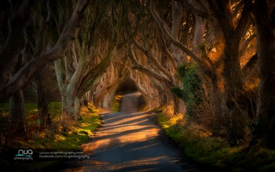 Photographing the Dark Hedges